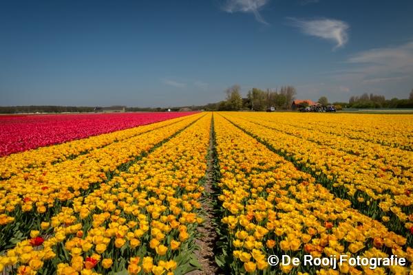Bloemenvelden Fotograferen