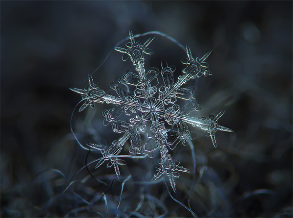 Sneeuwvlok Fotograferen