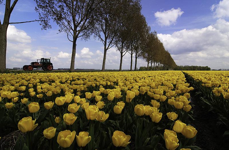Tulpen Fotografie Cursus