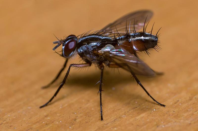 Cursus Macrofotografie - Insecten