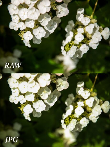 Het verschil tussen RAW en JPG