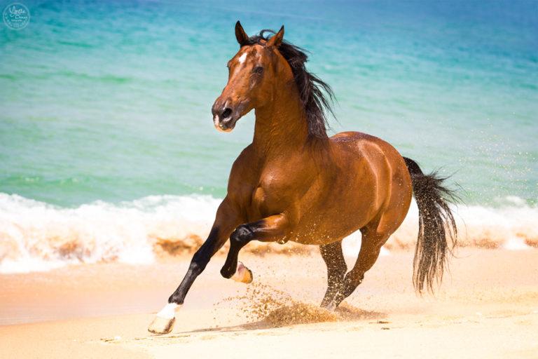 Het eindresultaat een paard los op het strand