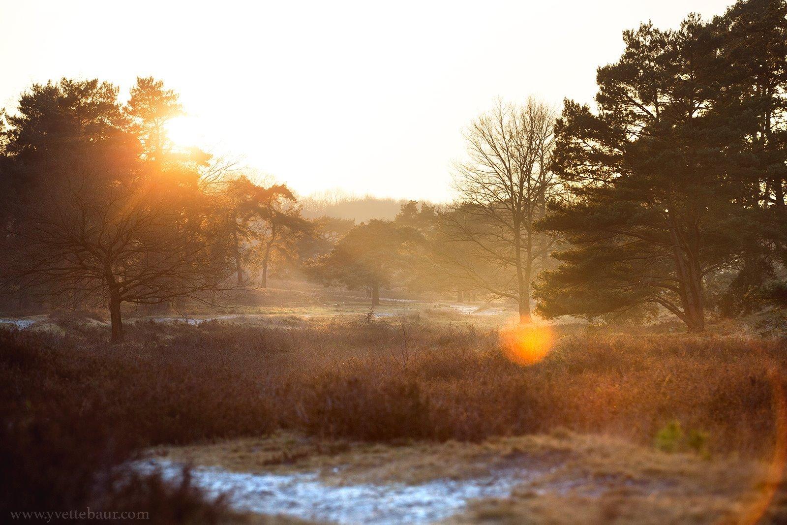 Voordelen van een statief bij landschappen