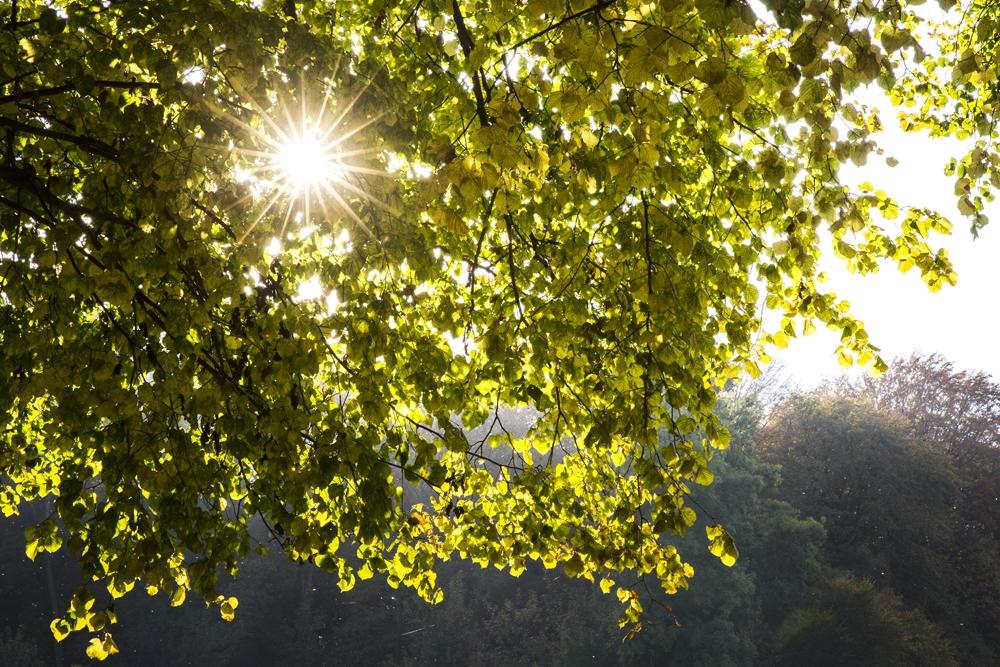 Laat de zon door een boom schijnen