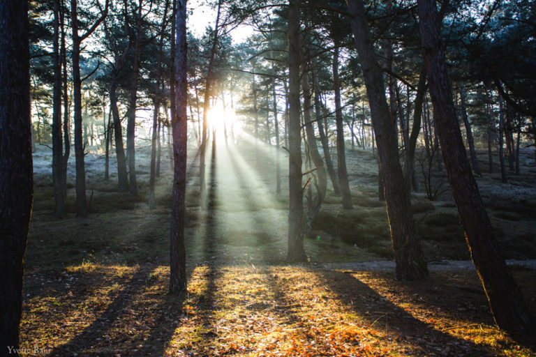 De zonnestralen in het bos