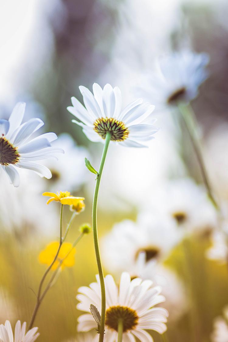 Macrofotografie - Bloemen fotograferen
