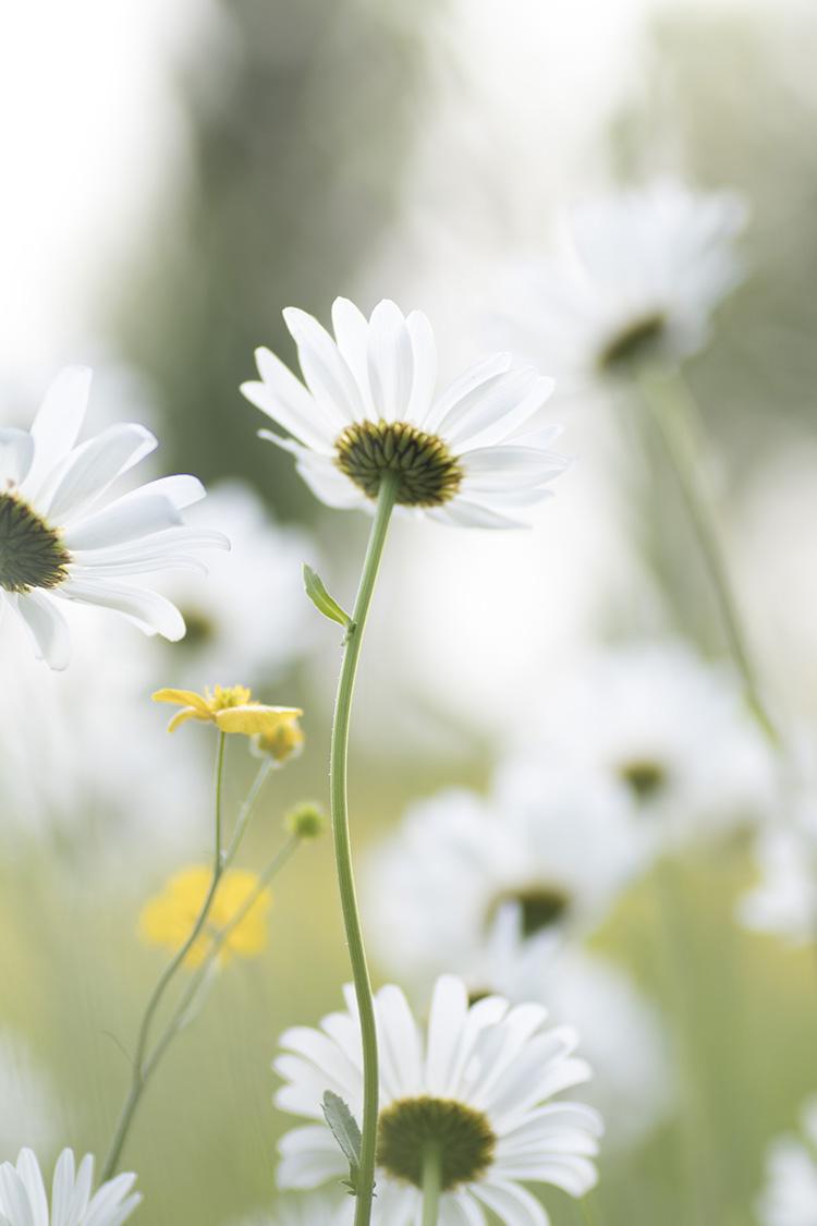 Natuurfotografie - Bloemen fotograferen