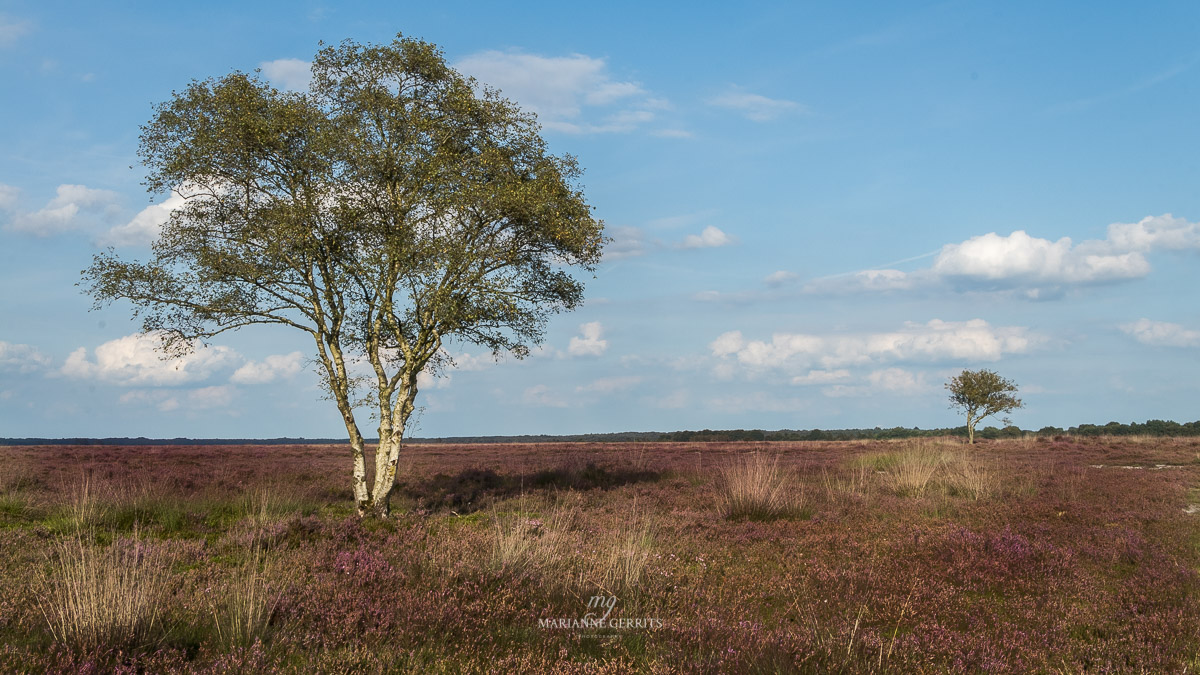 Heide foto landschapsfotografi marianne gerrits
