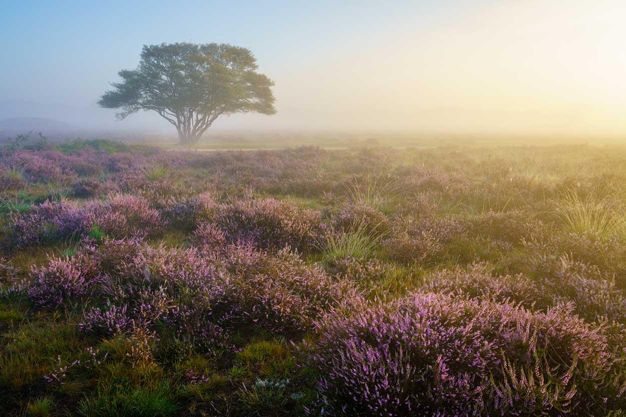 Workshop landschapsfotografie - Bloeiende heide