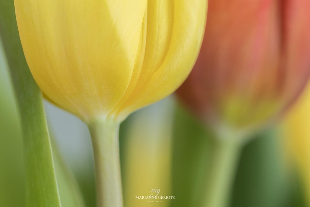 Verlangen naar het voorjaar