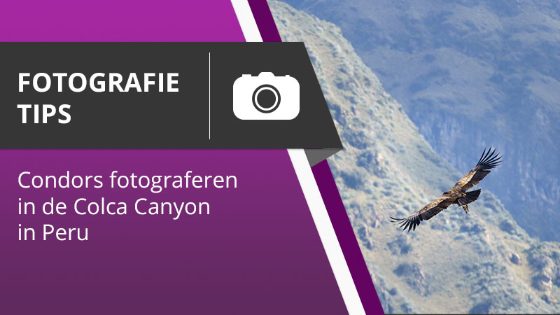 Fotografie Tips 004 - Condors fotografie in de Colca Canyon in Peru