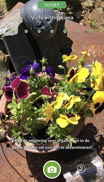 bloemen seek identifeceren app 1