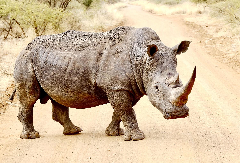 Fotoreis Afrika - Fotosafari Big Five