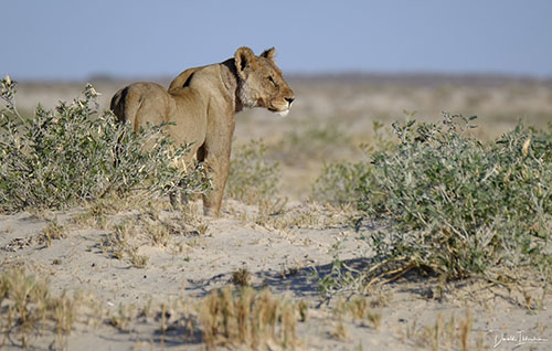Fotoreis Zuid-Afrika - Leeuwin