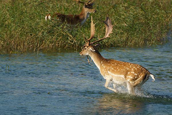 Cursus wildlife fotografie - Amsterdamse Waterleiding Duinen