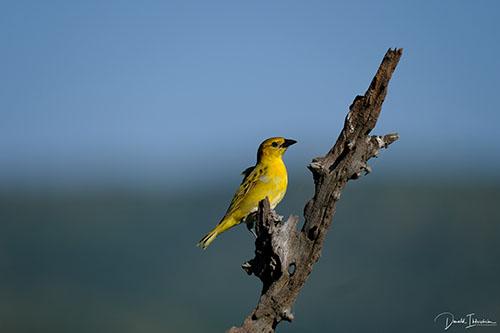 Fotoreis Zuid-Afrika - Vogels
