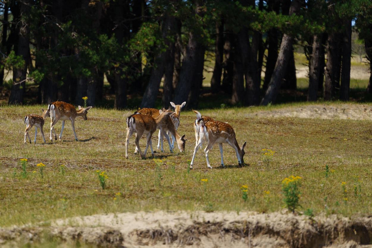 Workshop Natuurfotografie - Landschappen met dieren fotograferen