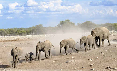 Fotografie Reizen naar Afrika