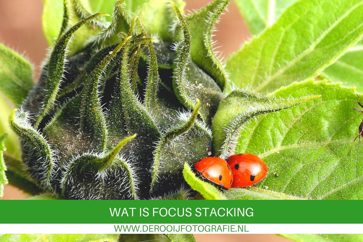 wat is focus stacking