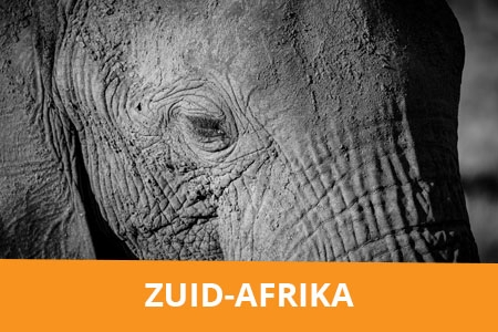 Fotografiereis Zuid-Afrika - Safari