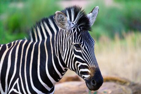 Fotoreis naar Zuid-Afrika - Safari