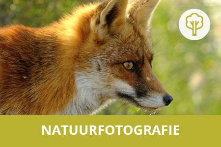 fotograferen in de natuur les