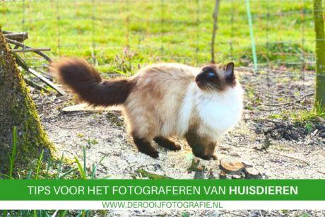 fotografietips voor het fotograferen van huisdieren