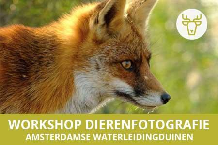 Workshop dieren fotograferen in Amsterdamse Waterleidingduinen