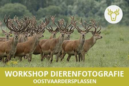 workshop dierenfotografie oostvaardersplassen 1