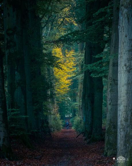 Workshop boslandschappen fotograferen