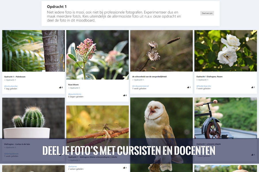 Online Fotografie Cursus met opdrachten
