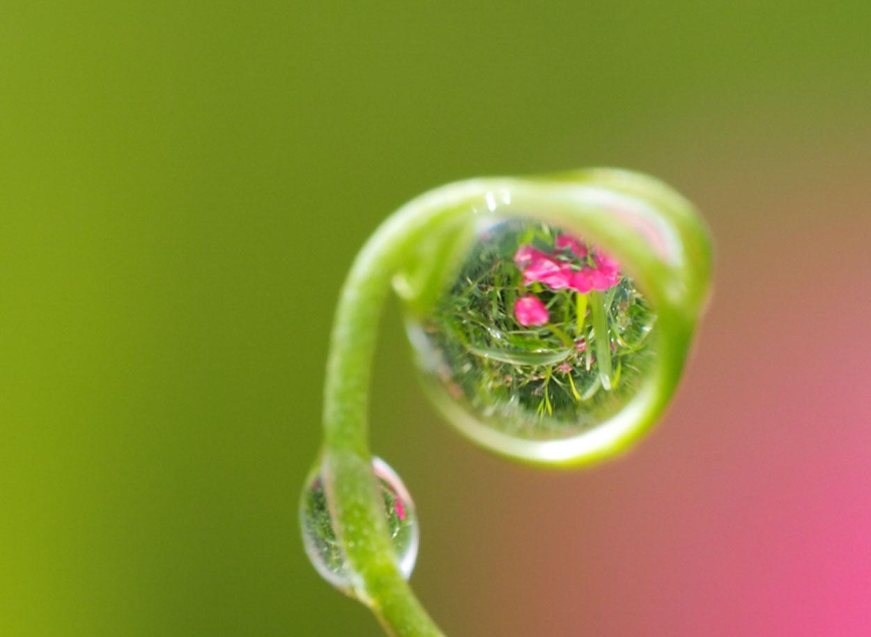 Reflecties fotograferen in waterdruppels met een macrolens