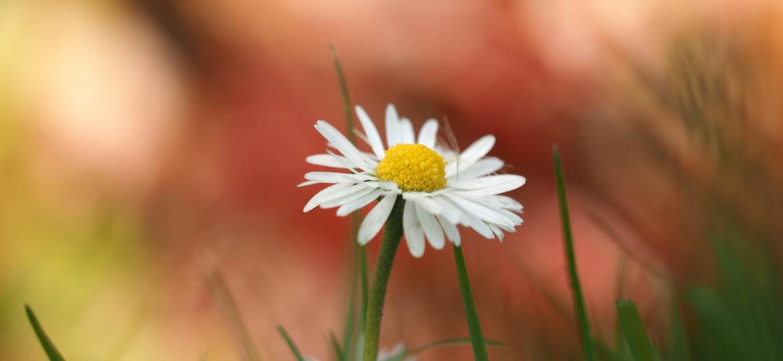 Bloemen fotograferen met onscherpe achtergrond