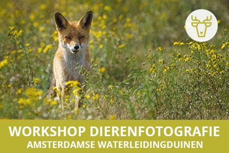 Workshop Dierenfotografie - Amsterdamse Waterleidingduinen