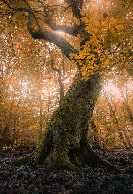 Fotografieweekend Landschapsfotografie - Boslandschappen fotograferen