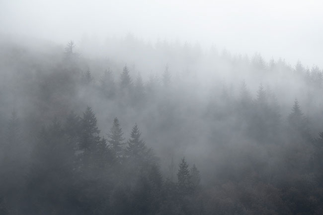 Fotoweekend Landschapsfotografie - Fotoreis naar de Ardennen