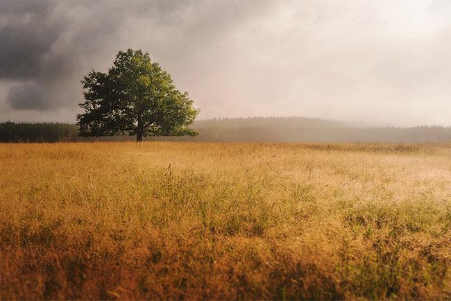 Fotografie Weekend - Landschappen fotograferen in de Ardennen