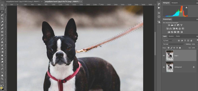 Longeerlijn of hondenriem wegbewerken met photoshop